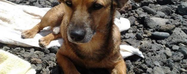 PANCHO: ¡salvado de acabar en la perrera!